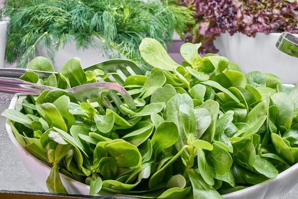dieta-detox-verdura